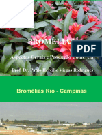 cultivo Bromelia 2013