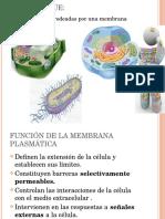 Membrana plasmática y transporte de macromoléculas.pptx