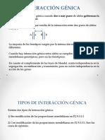 Interacción Génica 2014