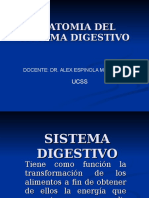 9 Sistema-digestivo (1)