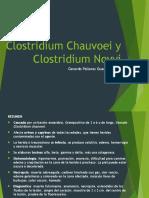 Clostridium Chauvoei