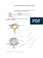 Examen Neuroanatomia Basica Columna Vertebral