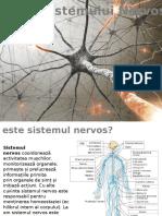 Igiena Sistemului nervos