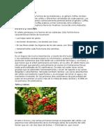 TAXONOMIA DEL CAFE.docx