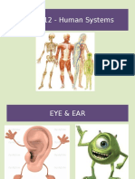 Biology Eye and Ear ppt