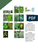 folder plantas medicinais