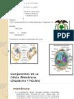 Componentes de La Célula (Membrana, Citoplasma