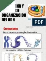CG17 Cromatina Niveles de Organización