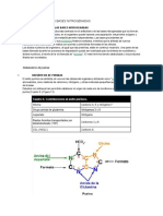 Metabolismo en Las Bases Nitrogenadas