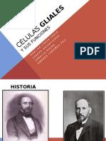 Células Gliales y Funciones