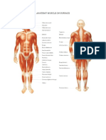 Anatomy Muscle on Surface