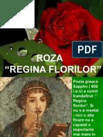 0roza_reginaflorilor