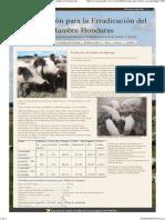 Organización Para La Erradicación Del Hambre en Honduras _ Crianza de Cerdos Con Moringa