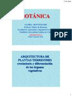 Arquitectura+de+plantas+leñosas