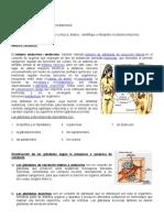 Taller Sistema Endocrino Hormonas