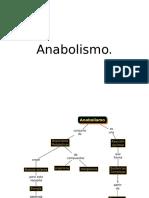 Taller 5 Anabolismo