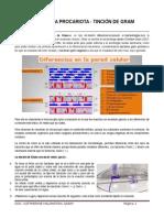 Práctica 1b - Tinción de Gramtinción de Gram