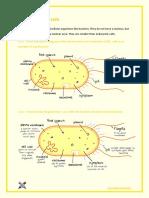 2.2 - Prokaryotic Cells.pdf