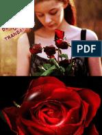 De Ce Plang Oare Trandafirii