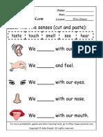 Your Body  The Five Senses