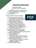 Anatomie l.p. Muschii Piciorului
