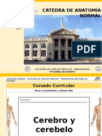 07.-CEREBRO-Y-CEREBELO.ppsx