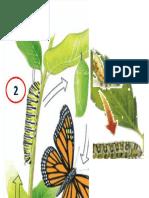Metamorfosis de La Mariposa