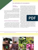 Manejo Dos Polinizadores e Polinização de Flores Do Maracujazeiro Parte 3