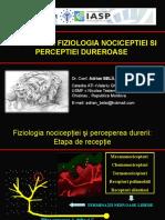 Fiziologia-durerii