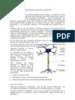 Bases Biológicas de La Conducta (2)