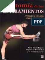Anatomia Estiramientos