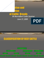 Beef Cattle Classification.ppt