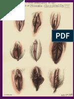 Guía Profesionales de La Salud Sexual Femenina