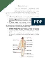 Sistema Nerviosolorena