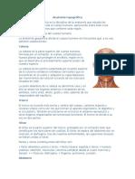 Anatomía topográfica.docx