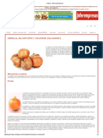 Cebolla - Información general.pdf