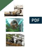 Problemas de Cautiverio en Zoologico