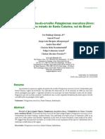 JR IR Et Al, 2009, Registro de P Maculosa Em SC