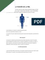 La Función de La Piel en el cuerpo humano