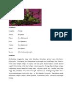 Klasifikasi lumut