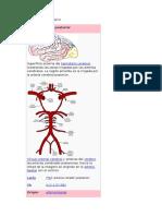 Arteria Cerebral Posterior