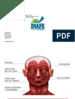 Musculos del cuello Anatomia