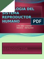 Histologia Del Sistema Reproductor Humano 2013