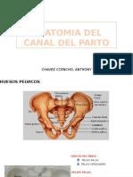 Anatomia Del Canal Del Parto