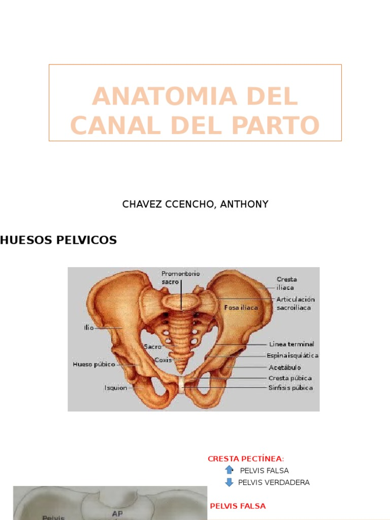 Hermosa Lo Que Es Una Exploración De La Anatomía Durante El Embarazo ...