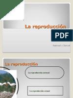 6 Tiposdereproduccin1 120605221552 Phpapp01