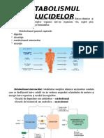 Glucide Metabolism