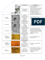 Plant Cell Organelle Chart