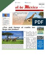 Noticia Jirafas