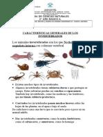 guasinvertebrados2-150804224719-lva1-app6892 (1)